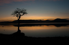 Milarrochy Bay (evs.gaz) Tags: tree wool water bay scotland highlands wire loch argyle lomond bute milarrochy