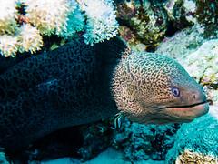 IMG_0375 (eye[4]eye) Tags: egypt diving gypten tauchen bluewaves
