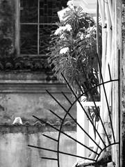 backview (1jonathan1) Tags: city blackandwhite fence cartagena