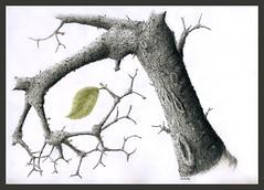 Leaf (Karwik) Tags: tree pencil pencils leaf drawing li drzewo lisc owek rysunek olowek