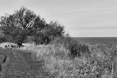 Ostseekste / Coast of baltic sea (r.stopable1) Tags: monochrome landscape blackwhite balticsea landschaft ostsee fehmarn staberdorf schleswigholstein norddeutschland ostseekste coastofbalticsea