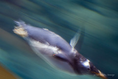 valencia 2016-92 (hiroke636) Tags: valencia mar peces oceano oceanografic