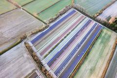 Champs de jacinthes (Les pieds dans le vide) Tags: france europe champs bretagne aerialview 29 paysage fr fra finistre vuearienne plomeur champsdefleurs