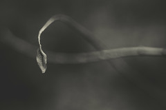 Alone 82/366 (Watermarq Design) Tags: blackandwhite nature grey leaf alone moody gloomy bokeh project366
