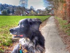 20150322-DSC00877_tonemapped-2.jpg (Tanja und Ralf Kersting) Tags: portrait deutschland nordrheinwestfalen hdr bommel lemgo