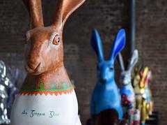 Beannachta na Csca Oraibh (Keith Mac Uidhir  (Thanks for 3.5m views)) Tags: ireland dublin rabbit bunny bunnies easter pascua irland pscoa ostern easterbunny dublino irlanda irlande pasqua pasko ierland easterrabbit irska wielkanoc pques dubln irlandia lirlanda irsko  paskalya airija  irlanti  cng  iirimaa ha     rorszg         rlnd