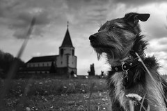 The Guardian of Dompeter, France. (boomer_phil) Tags: sky bw dog church nikon friend respect bokeh outdoor ciel amour nuages glise fidle d7100