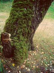 (mariiasparkles17) Tags: summer grass pine forest soft silence heat needles cones
