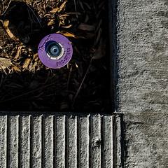 purple rain (MyArtistSoul) Tags: ca shadow urban abstract texture geometric leaves lines square concrete pattern purple debris deep minimal round grooves stains oxnard s100 sprinklerhead 0443 walkingtothestore
