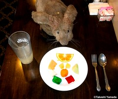 Dr. Takeshi Yamada and Seara (Coney Island Sea Rabbit) at the Seaport Buffet Chinese restaurant in Sheepshead Bay in Brooklyn, NY on May 13, 2015.  20150513 135=3040C= (searabbits23) Tags: ny newyork sexy celebrity rabbit art hat fashion animal brooklyn sushi asian coneyisland japanese star restaurant tv google king artist dragon god manhattan famous gothic goth uma ufo pop taxidermy vogue cnn tuxedo bikini tophat unitednations playboy entertainer oddities genius mermaid amc mardigras salvadordali performer unicorn billclinton seamonster billgates aol vangogh curiosities sideshow jeffkoons globalwarming mart magician takashimurakami pablopicasso steampunk damienhirst cryptozoology freakshow seara immortalized takeshiyamada roguetaxidermy searabbit barrackobama ladygaga climategate  manwithrabbit