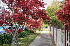 DSCF4547 (M.D.Rozen) Tags: nature bush hiking sydney australia fujifilm cascade bushwalk katoomba leura x100t