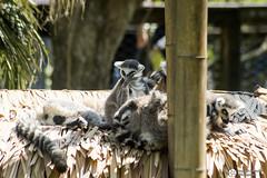 _DSC5963 (alessandro.spagnolli) Tags: zoo natura tamronlens naturalistica lecornelle parcofaunistico sonyalpha77