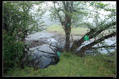 IMG_1361 (c0466art) Tags: light beautiful grass fog creek canon landscape scenery atmosphere mysterious land 1dx c0466art