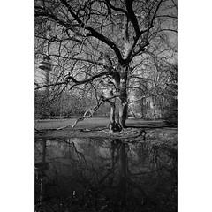 Trees 12 (Hans de Meij) Tags: park trees blackandwhite analog rotterdam 135 ilfordxp2super euromast leicam2 hetpark carlzeisscbiogon4521zm reflectaproscan10t