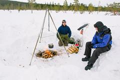 DSC_7711 (Adventurin') Tags: dog sweden stockholm aurora lapland sledding kiruna nothernlights