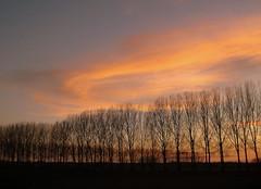 Le plat pays qui est le mien (johan van moorhem) Tags: countryside belgium belgique brugge belgi westvlaanderen bruges gent backhome gand eveninglight flanders platteland vlaanderen bicycleride