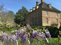 Wisteria vines bloom @ W&M (William & Mary Photos) Tags: flowers house spring scenery wm williamandmary presidents williammary collegeofwilliamandmary collegeofwilliammary