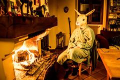 ROGER AU CHAUD DANS SON TERRIER (nARCOTO) Tags: rabbit lapin