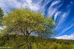 Beautiful combination (borisbitsin) Tags: sky tree nature clouds landscape bulgaria  belitsa
