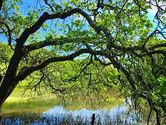 Trees and reflections (harminder dhesi photography) Tags: california park trees green nature water reflections landscape outdoors spring hiking sonoma bayarea sonomacounty norcal s3 glenellen vsco snapseed vscocam