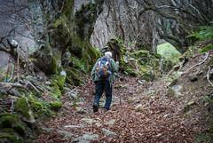 Caminado por el bosque (Oscar F. Hevia) Tags: autumn espaa musgo forest moss spain asturias walker bosque otoo somiedo mountaineer asturies caminante montaero principadodeasturias villardevildas adarin