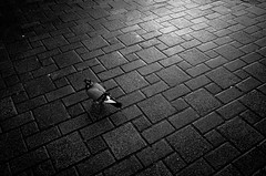 ( (Jason Lin)) Tags: bw blackwhite pigeon ricoh 2016 grii