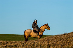 Horse On The Hill - Cleeve Hill, Gloucestershire. (Jeremiah Huxley Productions) Tags: england gloucestershire cheltenham cleevehill