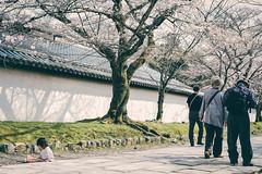 Japan Kyoto . . Skura in Daigo-ji  .  DSC_8155 (Ming - chun ( very busy )) Tags: travel flower tree japan cherry 50mm nikon kyoto blossom   cherryblossom  sakura nikkor f18    d800  streetshot  50mmf18        traveljapan  f1850mm   streetsnap sukura