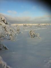 Nice winterday on Billingen. (Göran Nyholm) Tags: