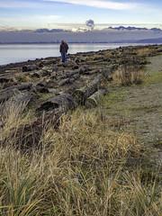 Field of driftwood (Tony Tomlin) Tags: ocean canada mountains fog sand bc logs crescentbeach