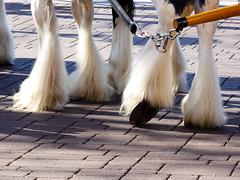 Foot Lifting (lmurphy) Tags: nature animal animals potd