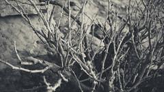 vintage editing (abdullah_13) Tags: blackandwhite bw black vintage photography nikon professional saudi arabia riyadh     d5200
