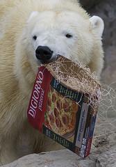 DSC_7189 (ucumari photography) Tags: ucumariphotography anana polarbear ursusmaritimus osopolar ourspolaire oursblanc oso bear animal mammal nc north carolina zoo eisbär ísbjörn orsopolare полярныймедведь 北極熊