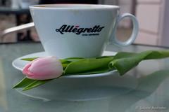 Das Beste zum Schlu (Sockenhummel) Tags: flower cup tasse coffee cafe fuji rosa kaffee tulip fujifilm espresso blume tisch blte x30 frhling tulpen tulpe kaffeetasse bundesplatz allegretto fiinepix fujix30 cafewolkenstein