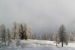 WinterDay (NikonTreeMonkey) Tags: schnee winter cloud white snow cold nature fog sunrise landscape austria tirol sterreich europe nebel view cloudy foggy wolken landschaft tyrol beautyful leutasch winter2015