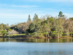 Enjoying the Los Gatos Creek Trail (randyherring) Tags: california park ca blue trees lake reflection green water clouds duck afternoon outdoor losgatos picnictable losgatoscreektrail piedbilledgrebe podilymbuspodiceps vasonalakecountypark