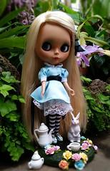 Alice (Motor City Dolly) Tags: blue white rabbit bunny eye glass socks cat hair eyes doll long looking dress cheshire alice tan chips handpainted blonde blythe through custom dolly wonderland striped