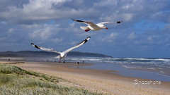 _DSC5321 (dawnbordin) Tags: sea hot bird beach birds head seagull gulls flight chips hungry lennox