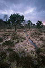 To The Fore (Draws_With_Light) Tags: camera winter tree water sunrise woodland season landscape places scene vegetation fields filters marshland northyorkshire skipwithcommon canoneos5dmarkiii lee09ndhardgrad davidhopley ef1635mmf4isusm lee105mmlandscapepolariser