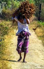 Burden of life (tdatta7100) Tags: poverty life travel rural saintmartin bangladesh struggle stphotographia