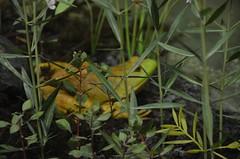 Bennett Spring State Park Nature Center 2016 (Adventurer Dustin Holmes) Tags: statepark frog missouri visitorcenter naturecenter 2016 bennettspring