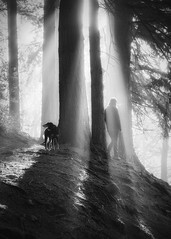 My Two Favourite Allies (Vemsteroo) Tags: morning trees light people dog mist nature beautiful silhouette fog forest sunrise outdoors birmingham exploring olympus ethereal worcestershire f28 westmidlands atmospheric omd lickeyhills mkii countrypark lickey em5 1240mm leefilters circularpoliser