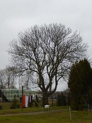 Taconisbosk, farmland and nature (Alta alatis patent) Tags: winter food farming laundry takonisbosk