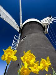 Holgate Windmill, York, Easter 2016 - 2