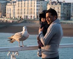 """Say cheese"" (susie2778) Tags: sea portrait bird brighton seagull olympus palacepier mft omdem5mii 35100panasonicf28"