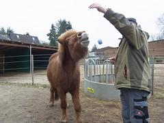 R0026459 (joachimelbing) Tags: mit lustig yoyo spielen pferden yoyogame