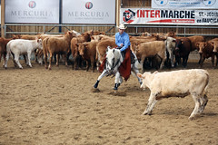 027 (yoann coin) Tags: en horse france western cutting bons equitation ccha chablais ncha charmot