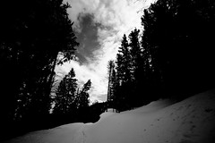 avancer (glookoom) Tags: blackandwhite bw white black france nature monochrome montagne grenoble landscape noir noiretblanc bokeh lumire contraste nuage paysage foret blanc sapin bois chamrousse rhnealpes