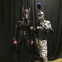 Two Ponies - 4 (AgentDrow) Tags: black sexy tail bondage bdsm pony zebra latex corset pvc zentai ponyplay