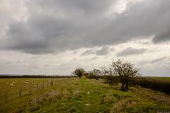 Reach 20th March 2016-6 (aljones27) Tags: countryside country cambridgeshire devilsdyke